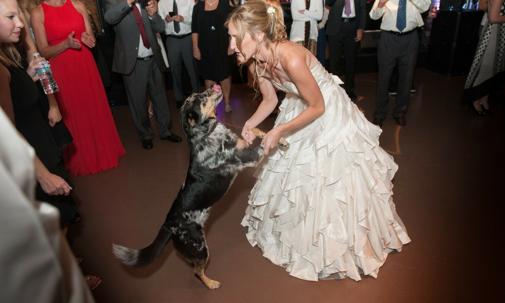 Bride on wedding day dancing with dog