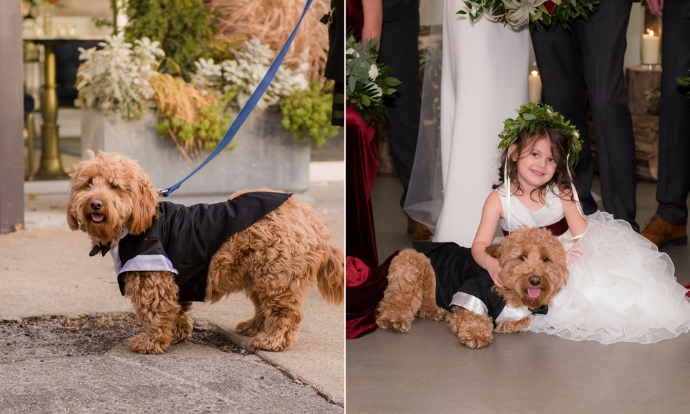 Dog at a wedding with flower girl
