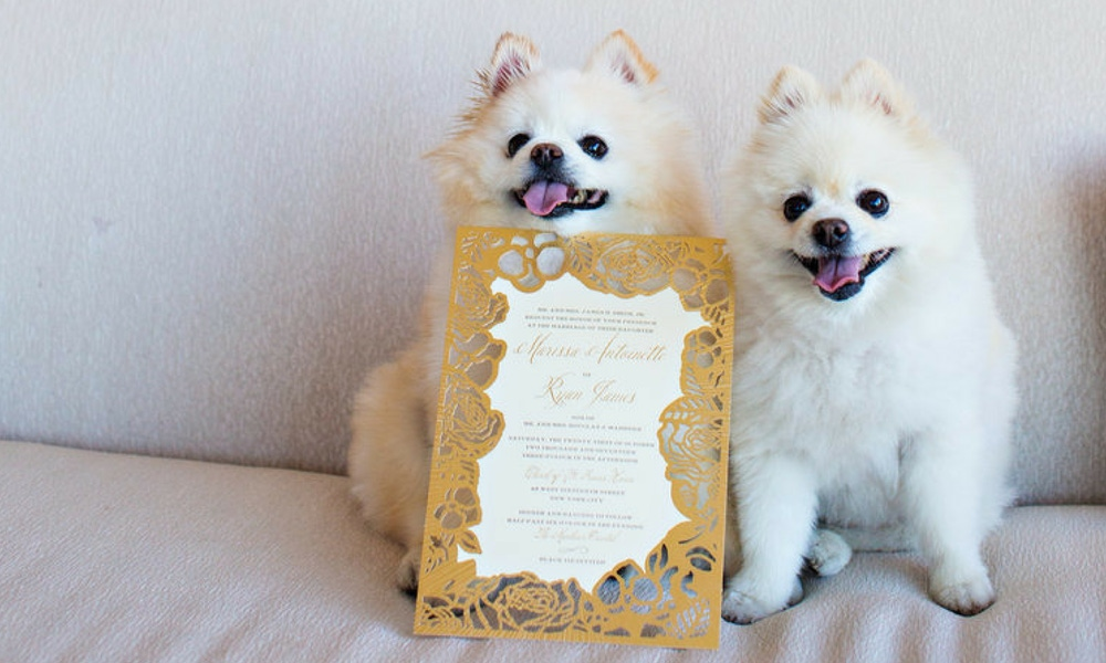 Dogs with a wedding invitation