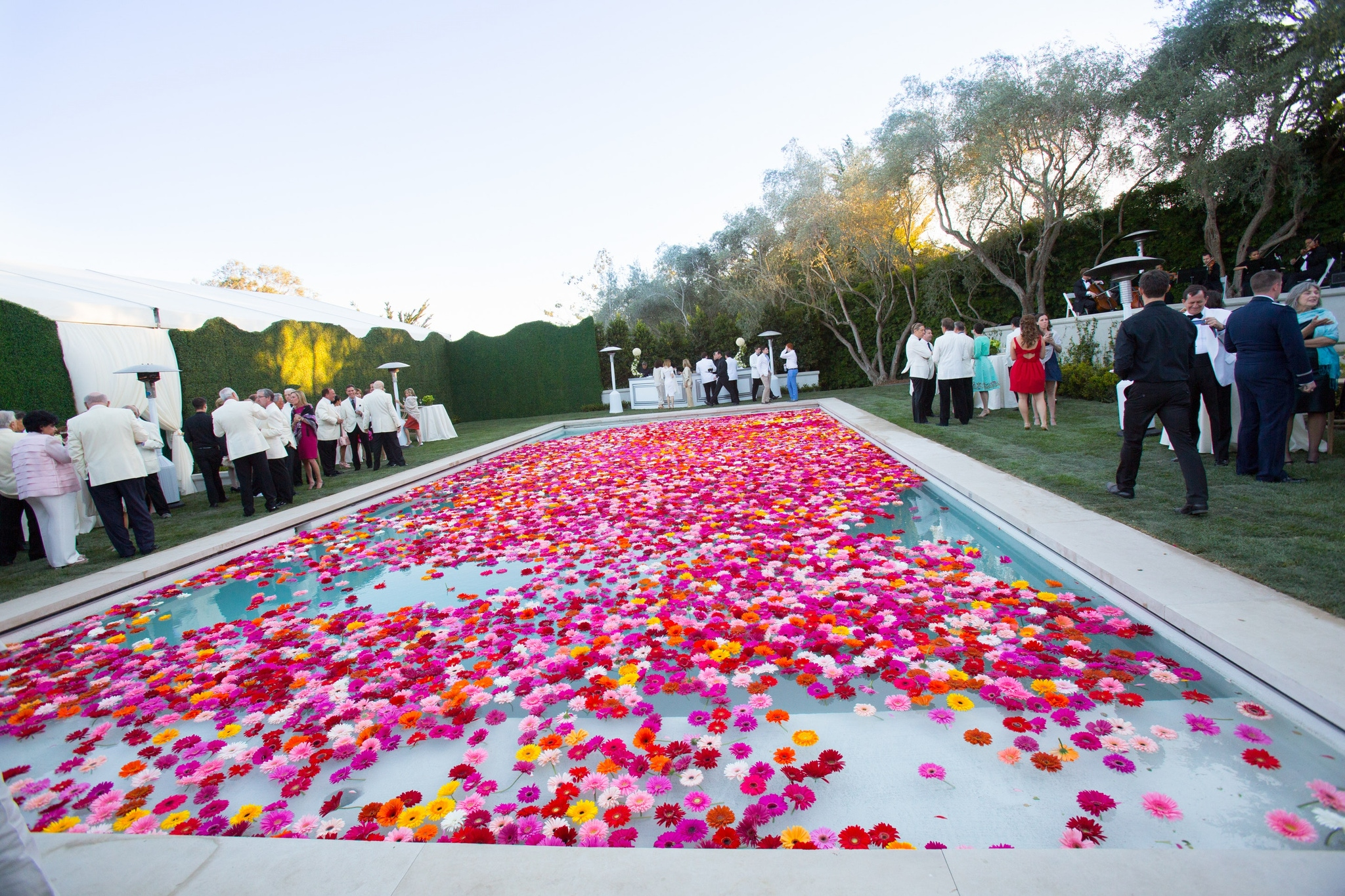 Pink flower petals in a pool