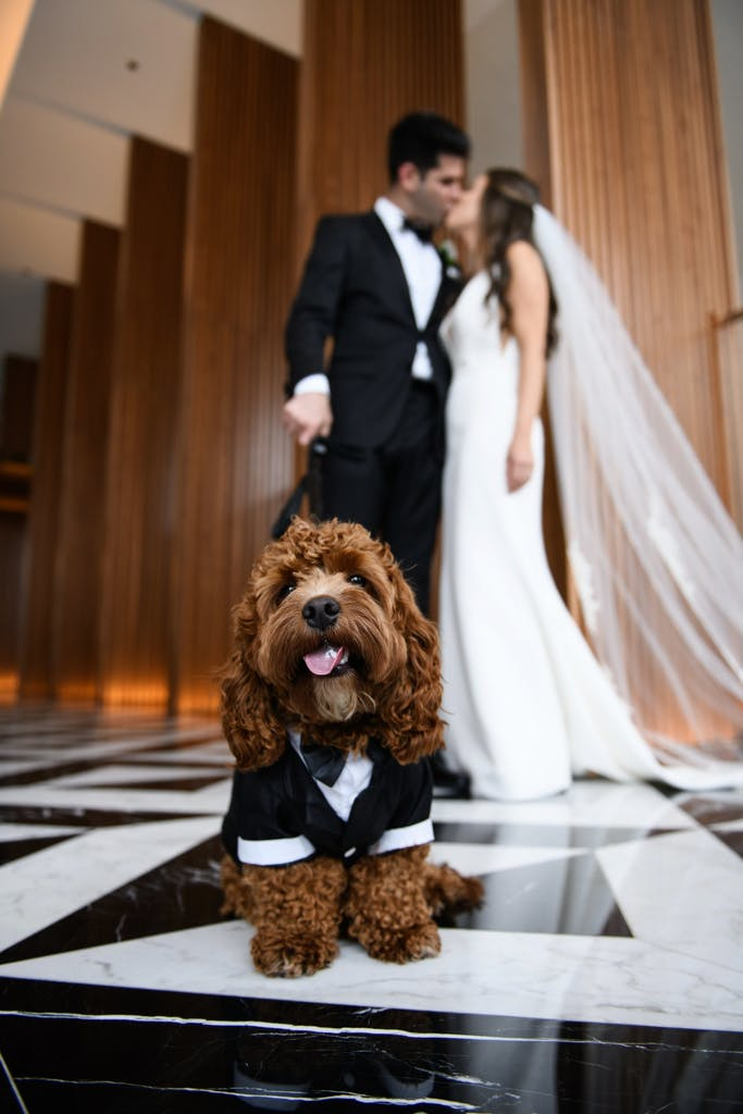 a bride and groom kiss in the background while a curly haired dog in a suit stands in the foreground on a leash looking into the camera with its tongue out.