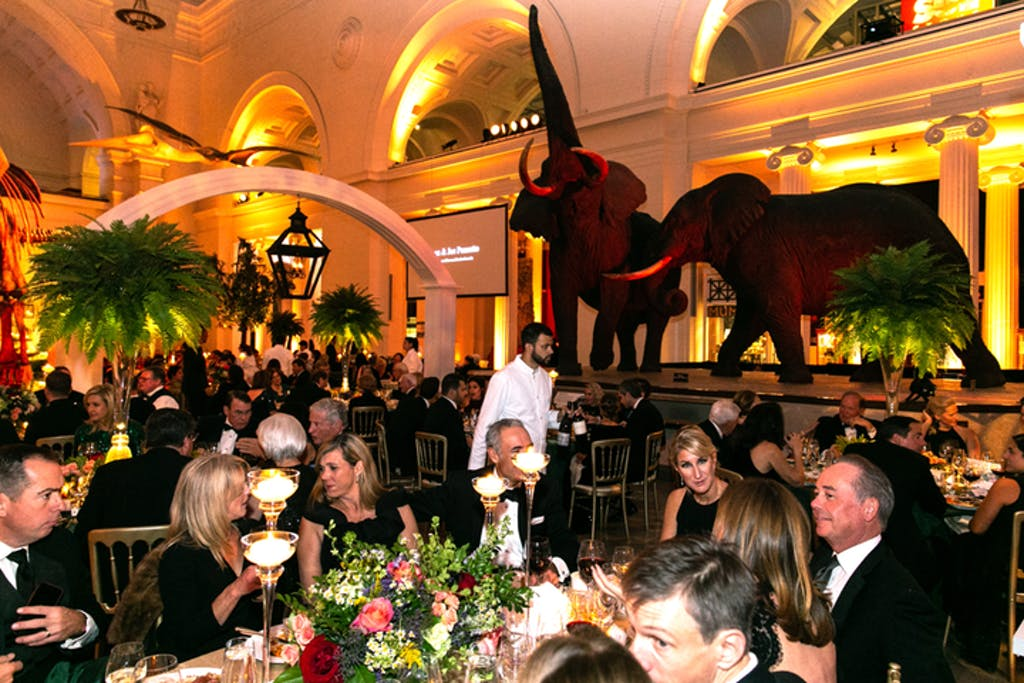 Guests enjoy sit down dinner at Field Museum in front of tusked elephants.