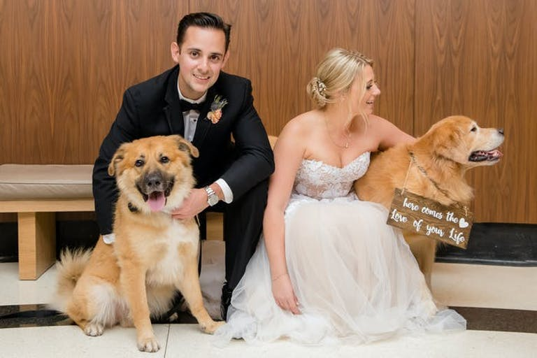 A couple crouches down with two dogs in hand