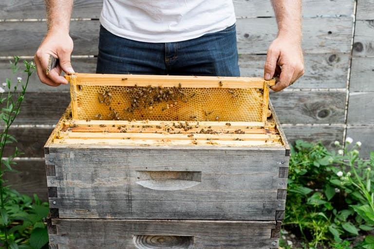 live bee hive for honey at dinner | PartySlate