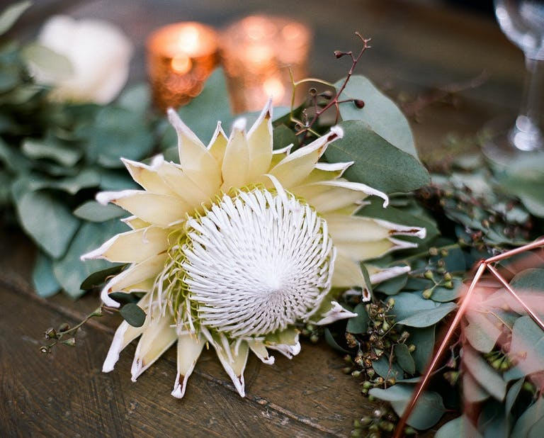 Closeup of Pale Gold King Protea Flower at Pastel Boho Wedding