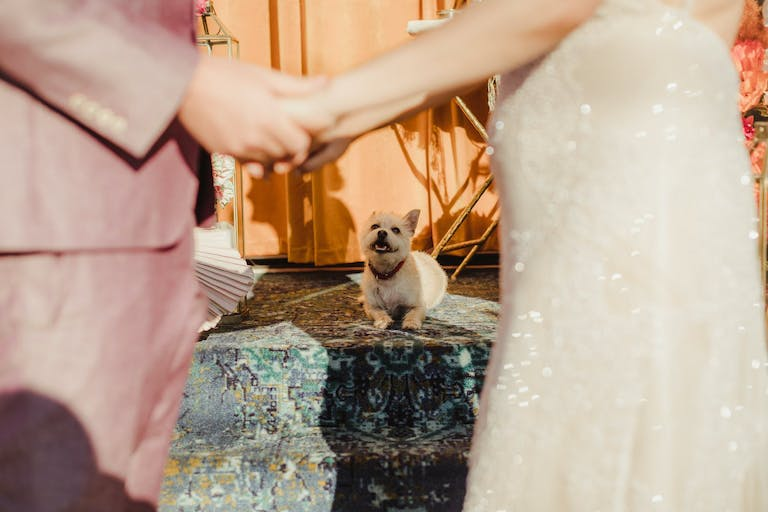 Small dog officiating wedding ceremony | PartySlate