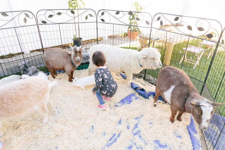 Colorful 2nd Kids Birthday Party with Petting Zoo with Goats and Sheep | PartySlate