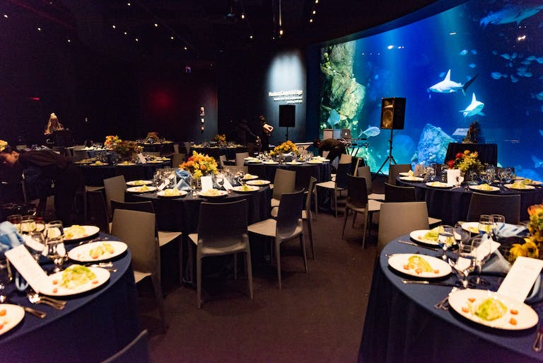 Kids First Birthday at the New York Aquarium Underwater Extravaganza with Sea Creatures Swimming By the Glass Windows and Tables Laid with Black Table Cloths | PartySlate