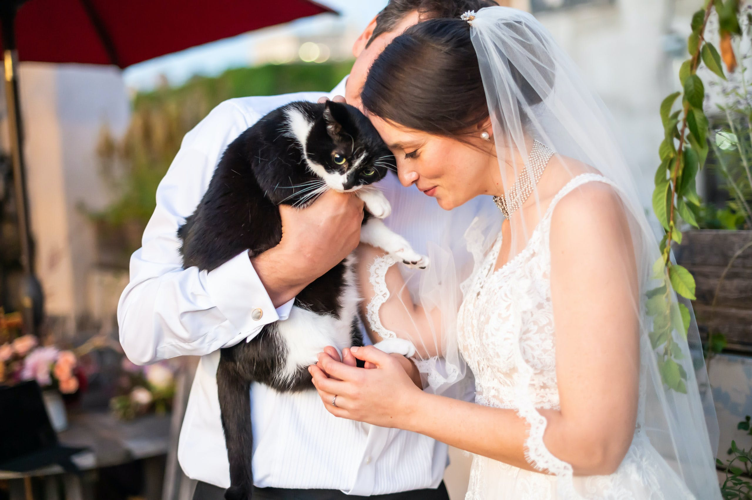 Bride and groom holding black cat l PartySlate