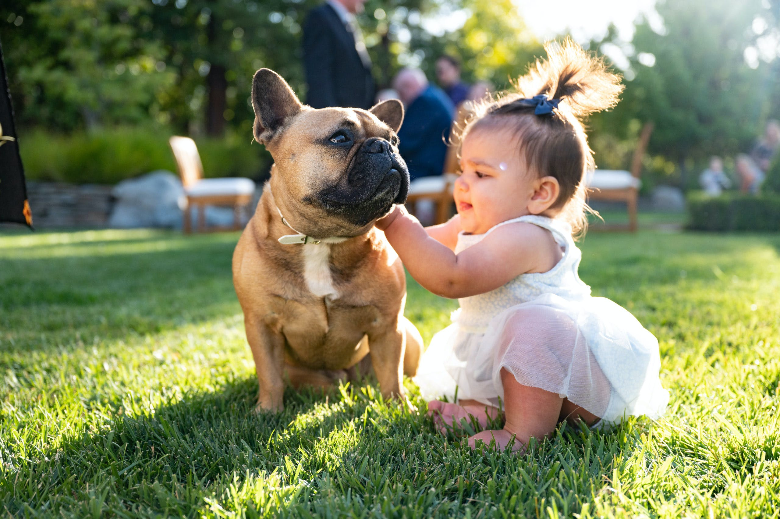 Baby petting a french bull dog l PartySlate