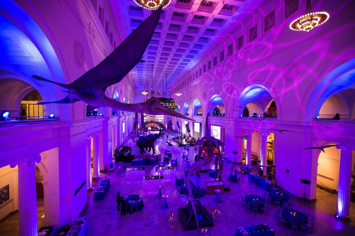 Corporate event at Field Museum's Stanley Hall with flying pterosaurs and purple uplighting | PartySlate